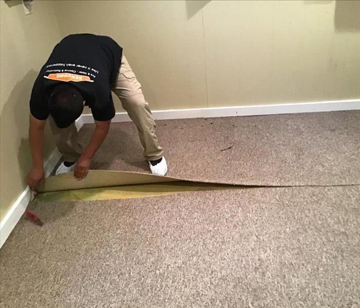 SERVPRO employee pulling up brown wet carpet in a room with yellow walls and white trim.