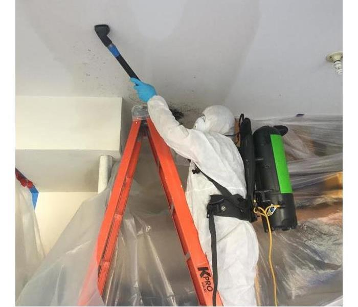 Mold Remediation DuPage County Residents: Follow These Mold Safety Tips If You Suspect Mold