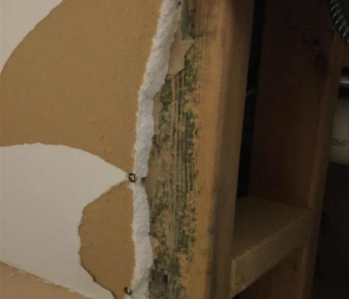 Mold Remediation Does Your Glen Ellyn Home Have A Mold Problem?
